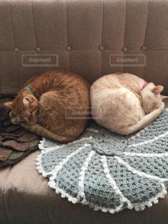 毛布の上に横になっている猫の写真・画像素材[1030097]