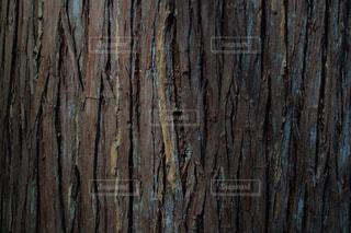 杉の木の写真・画像素材[1061786]