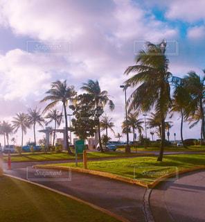 道の端にヤシの木の写真・画像素材[1030389]