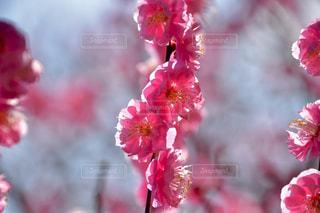 近くの花のアップの写真・画像素材[1029178]