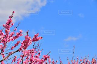 木の上を飛んでいる鳥の写真・画像素材[1029179]