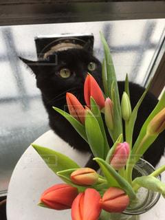 テーブルの上の花と猫の写真・画像素材[1029519]