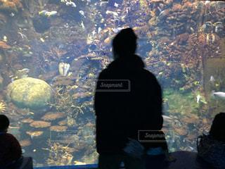 水族館の男性のシルエットの写真・画像素材[1029534]