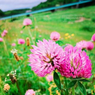 植物にピンクの花の写真・画像素材[1029716]