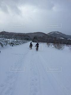 雪原を駆け抜けるの写真・画像素材[1029684]