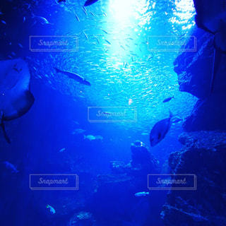 水中の写真・画像素材[1029754]