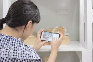 猫を撮る女性の写真・画像素材[1424370]
