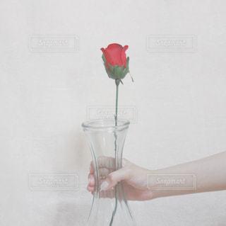 花瓶を持っている手の写真・画像素材[1643716]