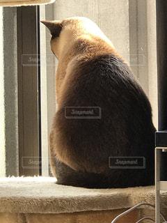 窓の前に座っている猫の写真・画像素材[1038526]