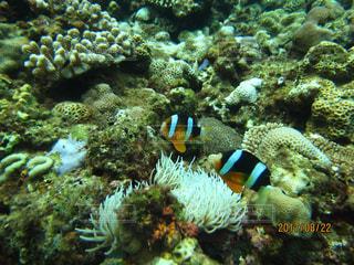 近くに珊瑚のアップの写真・画像素材[1058626]