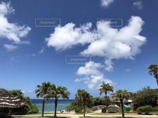 曇りの日でヤシの木の写真・画像素材[1058632]