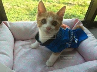 猫の写真・画像素材[34034]