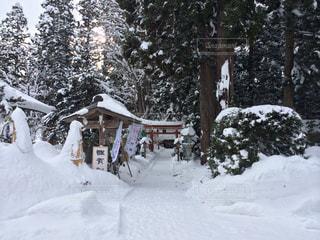 雪国の神社の写真・画像素材[1030967]