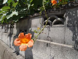 オレンジ色の花の写真・画像素材[1033434]