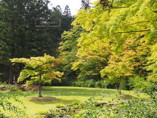 日本庭園の写真・画像素材[1035245]