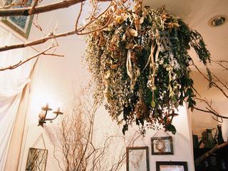 部屋の大きな木の写真・画像素材[1038017]