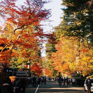 みちのくの小京都の写真・画像素材[1039114]