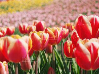 春満開の写真・画像素材[1039936]