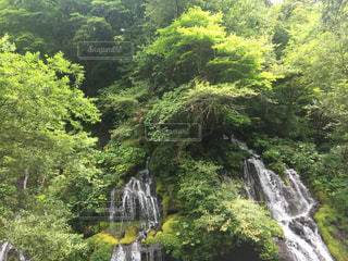 森の中の大きな滝の写真・画像素材[1030702]