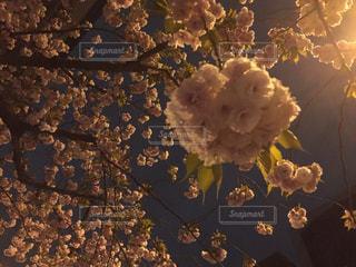 近くにいくつかの花のアップの写真・画像素材[1034693]