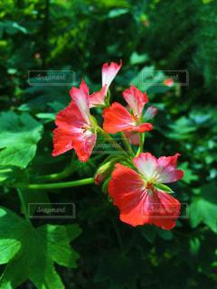 花の写真・画像素材[1094783]