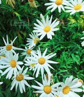 花の写真・画像素材[1094786]