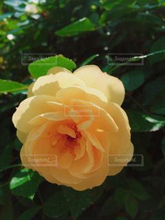 花の写真・画像素材[1094812]