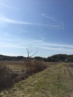 背景の木と大規模なグリーン フィールドの写真・画像素材[1031917]