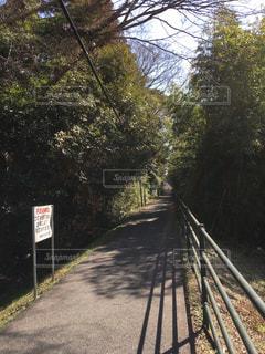 竹林の洞窟への入り口の写真・画像素材[1035760]
