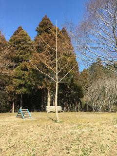 フィールドの真ん中の木の写真・画像素材[1035777]
