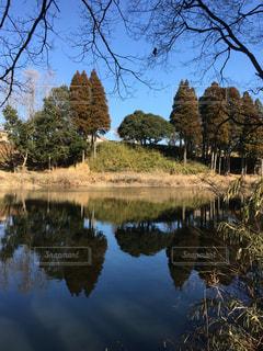 池に映る森林たちの写真・画像素材[1040403]