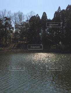 キラキラ光る池の写真・画像素材[1040409]