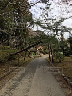 大木の入り口の写真・画像素材[1050494]