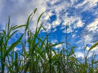 空と草木の写真・画像素材[3673995]