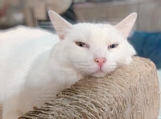 前を見ている猫の写真・画像素材[3760714]