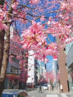 ピンクの花の写真・画像素材[4196029]