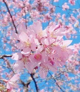 花のクローズアップの写真・画像素材[4196031]