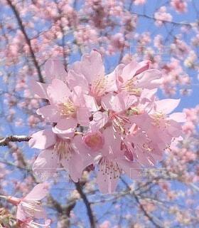 花のクローズアップの写真・画像素材[4196034]