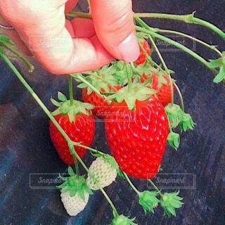 果物を持つ手の写真・画像素材[4200525]