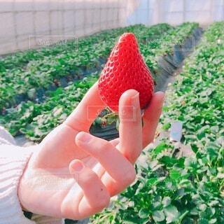 果物を持つ手の写真・画像素材[4200524]