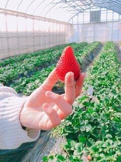 果物を持つ手の写真・画像素材[4200526]