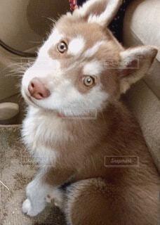 犬のクローズアップの写真・画像素材[4200534]