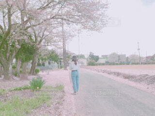 木の下の道に立っている人の写真・画像素材[4309614]