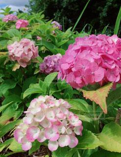 花のクローズアップの写真・画像素材[4573948]