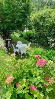 花園のクローズアップの写真・画像素材[4680093]