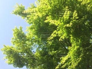 自然の写真・画像素材[12802]