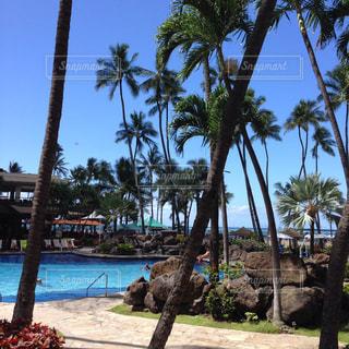 ハワイの写真・画像素材[1031767]