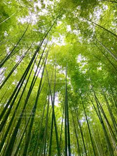 森の中の緑の植物の写真・画像素材[1036988]