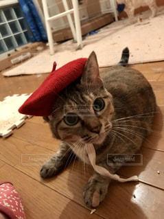 絵描き猫の写真・画像素材[1031443]