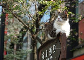 座っている猫の写真・画像素材[1042759]